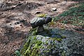 PiedrasEncimadas51.JPG
