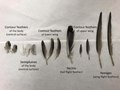 Pigeon Feathers - A Dissection Sampling.pdf