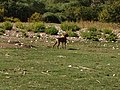 PikiWiki Israel 30134 Wildlife and Plants of Israel.JPG