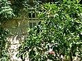 PikiWiki Israel 65934 the german colony in jerusalem.jpg