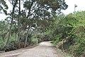 Piste de la Courtade, Île de Porquerolles, Hyères, Provence-Alpes-Côte d'Azur, France - panoramio.jpg