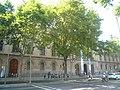 Plàtan de la plaça Universitat P1510828.jpg