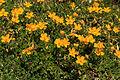 Plants from Drei Zinnen 03.jpg