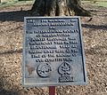 Plaque recognizing the Travilah Oak for its age.jpg