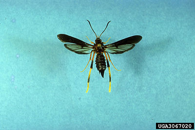 Picture of a band or musician: Ash Borer