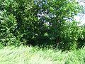 Poellauer Saifental 6 Ufer.JPG
