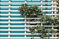 Poertschach Johannes-Brahms-Promenade Spalier Efeu 03052015 3126.jpg