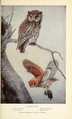 Portraits and Habits of Our Birds-1 0079.png