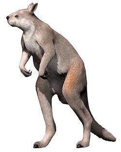Procoptodon goliah NT2.jpg