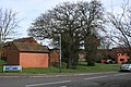 Protected tree, Austin Edwards Drive, Emscote - geograph.org.uk - 362380.jpg