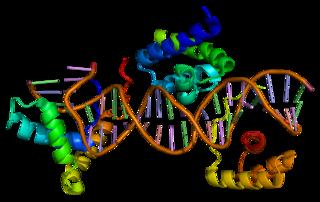SOX2 protein-coding gene in the species Homo sapiens