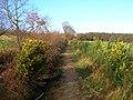 Public Byway to Limekiln Forest - geograph.org.uk - 316692.jpg