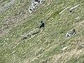 Punta Fetita, Valle d'Aosta (43929522100).jpg