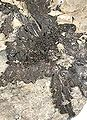 Pyrargyrite-153cc.jpg