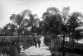 Queensland State Archives 12 Palm Avenue in Newstead Park Breakfast Creek Road Newstead Brisbane September 1926.png