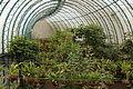 Quitos botaniska trädgård-IMG 8920.JPG