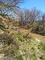 Río Onsella (Isuerre, Zaragoza) 02.jpg