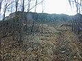 ROVINE DEL CASTELLO DI RAVISTAGNO - panoramio - iw3rua (2).jpg