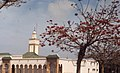 Rabat mosque and coral tree (37756710931).jpg