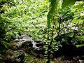 Rain water stream enroute kondane caves.jpg