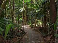 Rainforest Regenwald Australia (22865104000).jpg