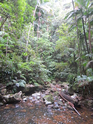 Nightcap National Park - Rainforest ecosystem in the World Heritage area.