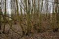 Rappershausen-9166.jpg