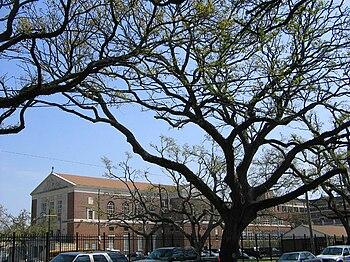 High Point Lacrosse >> Jesuit High School (New Orleans) - Wikipedia
