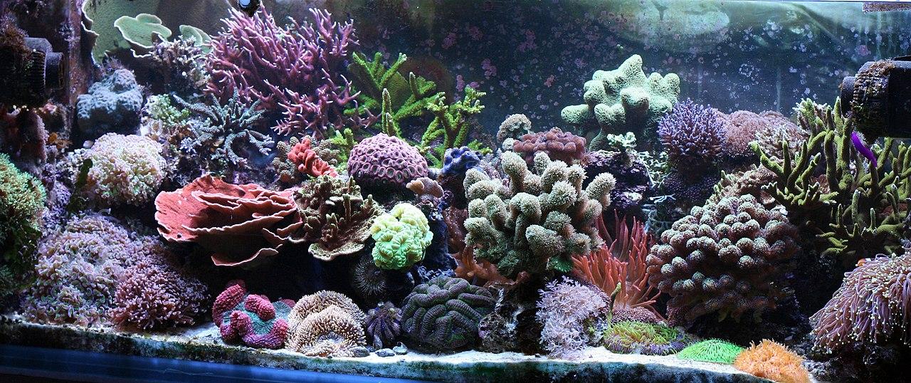 File Reef Aquarium At Home Jpg