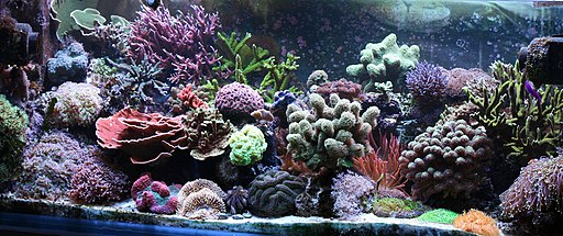 Saltwater Aquarium Setup as a reef tank