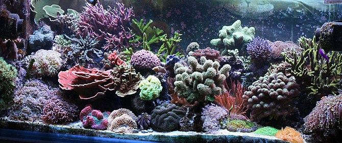 our 440 l reef tank