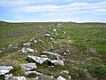Remains of an old Manx dry stone wall on coastal moorland - geograph.org.uk - 491584.jpg