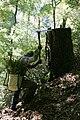 Restoring Douglas Fir on the Mattole River 2005.jpg