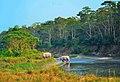 Rhinos-chitwan nation park.jpg