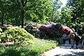 Rhododendronpark Bremen 20090513 097.JPG