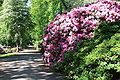 Rhododendronpark Bremen 20090513 239.JPG