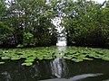 Rio Dulce Scene - Izabal - Guatemala - 01 (15714110940).jpg