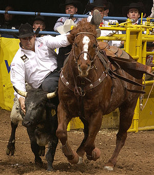 Steer wrestling - Bringing the steer to the ground