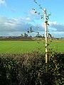 Rolling Farmland - geograph.org.uk - 588243.jpg