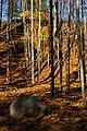 Rouge Park October 2011.jpg