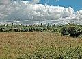 Rough pasture - geograph.org.uk - 1336360.jpg