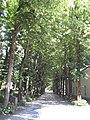 Royal Villa of Monza 2.jpg