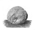 Roze fig. 90.png
