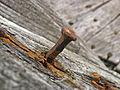 Rusted Nails.jpeg
