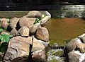 SABIÁ-LARANGEIRA (Turdus rufiventris).jpg