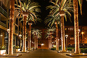 SAN JOSE CALIFORNIA PALM TREE 2010.jpg