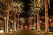 SAN JOSE CALIFORNIA PALM TREE 2010.jpg