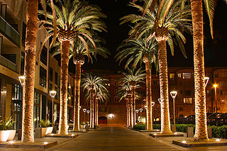 By Michael from San Jose, California, USA (Palm Row) [CC BY 2.0 (http://creativecommons.org/licenses/by/2.0)], via Wikimedia Commons