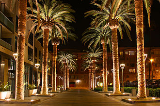 Silicon Valley - Downtown San Jose as seen with lit palm trees