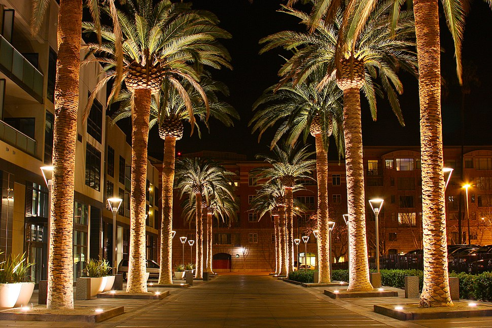 SAN JOSE CALIFORNIA PALM TREE 2010